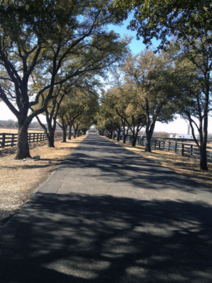 Driveway leading from the ranch.