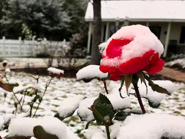 Mrs. Padilly's Winter Wonderland